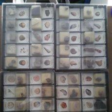 Coleccionismo de fósiles: LOTE 40 FÓSILES COLECCIÓN FÓSILES DEL MUNDO EN CUATRO ESTUCHES. Lote 90841075