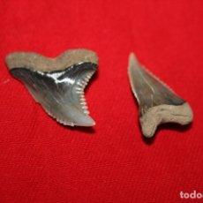 Coleccionismo de fósiles: HEMIPRISTIS - LOTE DE DIENTES FOSILES DE TIBURON - VIRGINIA( USA). Lote 92993455