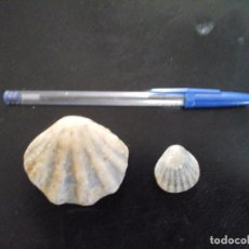 Coleccionismo de fósiles: DOS FÓSILES CONCHAS. Lote 94584519