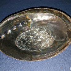Coleccionismo de fósiles: GRAN CONCHA DE NACAR OREJA DE MAR. Lote 96396471