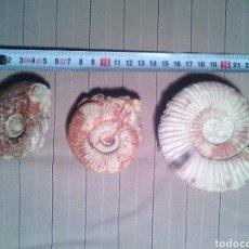 Coleccionismo de fósiles: LOTE 3 AMMONITES FOSIL. Lote 97443658