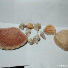 Coleccionismo de fósiles: CONCHAS DE MAR. Lote 99766175