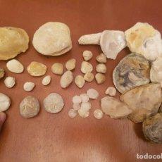 Coleccionismo de fósiles: LOTE FÓSILES FÓSIL FOSSIL ERIZO ECHINOID CARACOLA ALMEJA OSTRA SEMILLAS CORAL MOLUSCOS. Lote 103442751