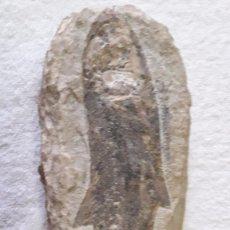 Coleccionismo de fósiles: PEZ FOSIL THARRIAS ARARIPIS,CRETACEO INFERIOR, 290 MM. Lote 104161043