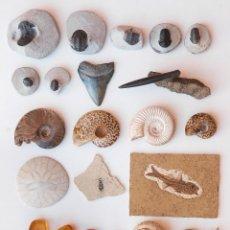 Coleccionismo de fósiles: ESPECTACULAR COLECCIÓN DE 30 FOSILES, COLECCIÓN PERSONAL IMPORTANTE COLECCIONISTA. Lote 104827139