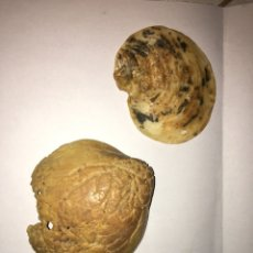 Coleccionismo de fósiles: LOTE FÓSILES. Lote 105370047