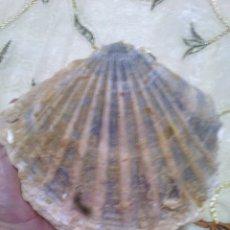 Coleccionismo de fósiles: GIGANTOPECTEN SP.. Lote 178670323