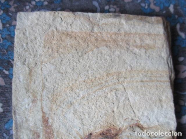 Coleccionismo de fósiles: PLACA DE PEZES - FOSIL - Foto 7 - 107435639