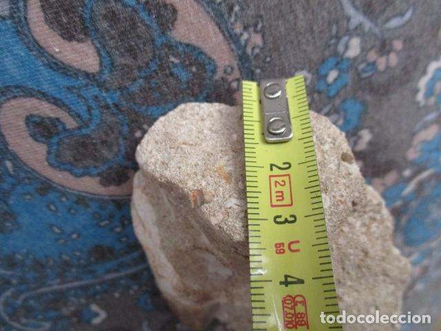 Coleccionismo de fósiles: DIENTE FOSIL DE TIBURON EXTINTO CARCHARODON MEGALODON - Foto 12 - 107440571