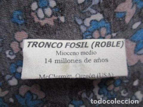 Coleccionismo de fósiles: Tronco Fosil (Roble) - Foto 3 - 107440855