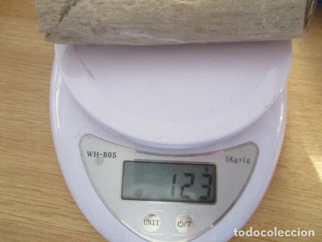 Coleccionismo de fósiles: Tronco Fosil (Roble) - Foto 12 - 107440855
