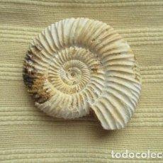 Coleccionismo de fósiles: CARACOL - FOSIL EN PIEDRA. Lote 107441523
