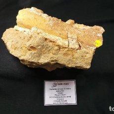 Coleccionismo de fósiles: CETÁCEO FÓSIL,BALLENA FÓSIL,FOSSIL CETACEAN,CÉTACÉ,VERY RARE,MUY RARO. Lote 108742119