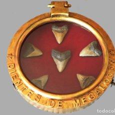 Coleccionismo de fósiles: 6 DIENTES DE MEGALODÓN AUTÉNTICOS, EN VITRINA CON FORMA DE OJO DE BUEY.. Lote 111370199