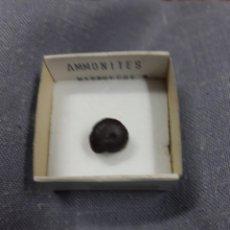 Coleccionismo de fósiles: FOSILES/MINERALES.-AMMONITES. Lote 111518966
