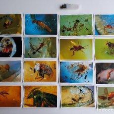 Coleccionismo de fósiles: 16 TARJETAS POSTALES INSECTOS INCLUIDOS EN AMBAR. FOTOGRAFIA. FOSIL.. Lote 112554127