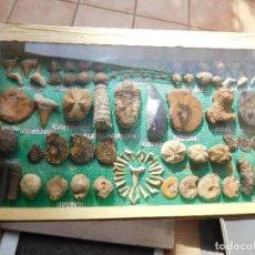 Coleccionismo de fósiles: COLECCIÓN DE FOSILES ORIGINALES MONTADO EN VITRINA . Lote 116278875