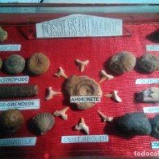 Coleccionismo de fósiles: CAJA CON FÓSILES DE MARRUECOS (NO PUEDO ASEGURAR -GARANTIZAR EXACTITUD DE LA INFORMACIÓN QUE REGOGE). Lote 118847207