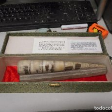 Coleccionismo de fósiles: GRAN FOSIL SINOCERAS CHINESE MIDE 22 CM LARGO CON SU CAJA. Lote 119445843