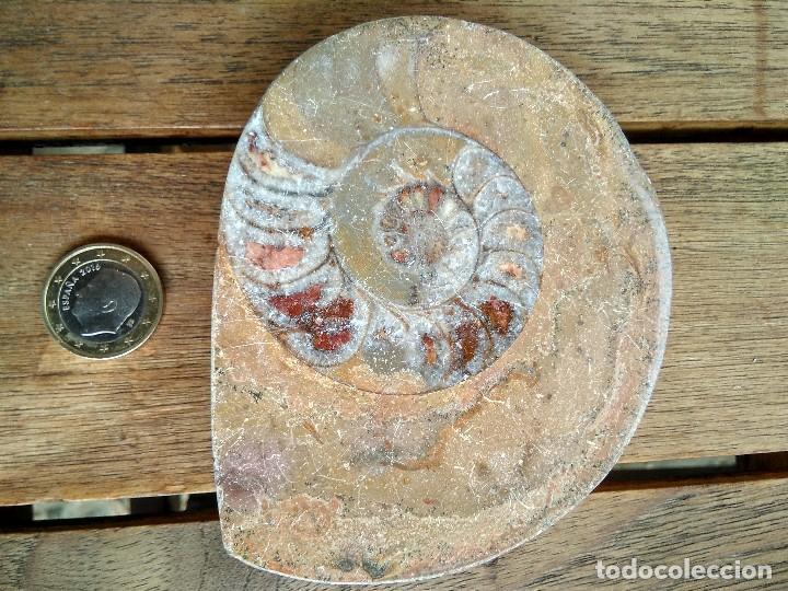FÓSIL ? GRANDE CON UNA CARA PULIDA (Coleccionismo - Fósiles)