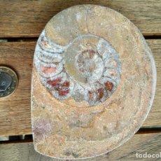 Coleccionismo de fósiles: FÓSIL ? GRANDE CON UNA CARA PULIDA. Lote 121526059