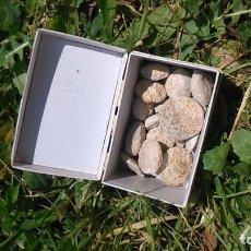 Coleccionismo de fósiles: COLLECCIÓN DE AMEBAS, (UNA VEINTENA) POR SÓLO DOCE EUROS. Lote 125055535