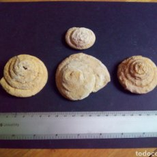 Coleccionismo de fósiles: GASTEROPODOS FOSILES LEPTOMARIA CRETACICO SUPERIOR (7). Lote 128798220