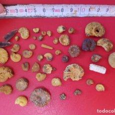 Coleccionismo de fósiles: LOTE AMMONITE FERROSO FÓSIL FOSILES AMMONITES AMMONITE ALICANTE ESPAÑA. Lote 128876571