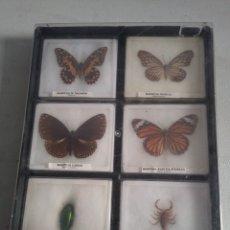 Coleccionismo de fósiles: CAJA EXPOSITOR CON MARIPOSA E INSECTOS DISECADOS.. Lote 130556039