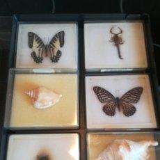 Coleccionismo de fósiles: COLECION DE MINERALES. Lote 130897536