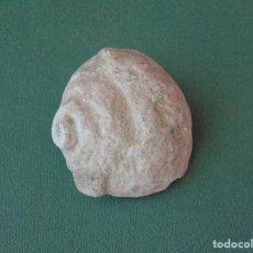 Coleccionismo de fósiles: FOSIL CARACOL 1. 5,5CM X 5,5CM X 3CM. Lote 132263306