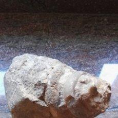 Coleccionismo de fósiles: CARACOLA FOSIL. Lote 135579402