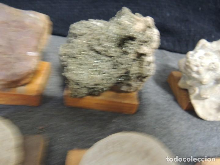 Coleccionismo de fósiles: lote 6 pza minerales y fosiles - Foto 7 - 136291302