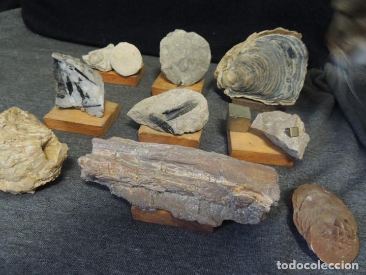 LOTE 9 PZS MINERALES Y FOSILES (Coleccionismo - Fósiles)