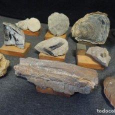 Coleccionismo de fósiles: LOTE 9 PZS MINERALES Y FOSILES. Lote 136292042