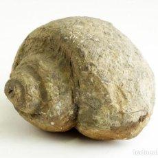 Coleccionismo de fósiles: HISTORIA NATURAL - FÓSIL - GASTERÓPODO - NATICA CF. TAMAÑO 10X8X6CM. 674 GRAMOS. Lote 138018042