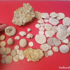 Coleccionismo de fósiles: LOTE FOSIL FOSSIL CORAL POLIPO ALMEJA BIVALVO CARAVOLA MOLUSCO ERIZO DE MAR GUSANO. Lote 140267278