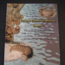 Coleccionismo de fósiles: TESOROS FOSILES DEL MUNDO. PALEONTOLOGIA, AMMONITES, TRILOBITES, DINOSAURIOS.. Lote 146127053