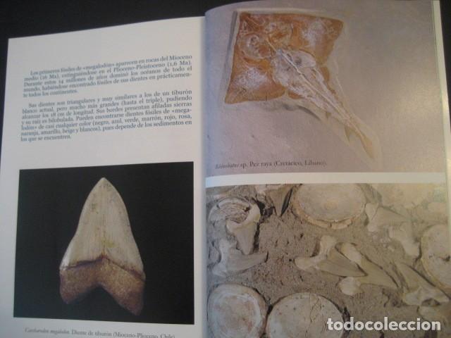 Coleccionismo de fósiles: TESOROS FOSILES DEL MUNDO. PALEONTOLOGIA, AMMONITES, TRILOBITES, DINOSAURIOS. - Foto 2 - 146127053