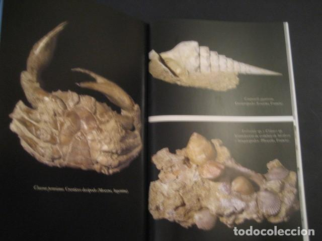 Coleccionismo de fósiles: TESOROS FOSILES DEL MUNDO. PALEONTOLOGIA, AMMONITES, TRILOBITES, DINOSAURIOS. - Foto 3 - 146127053