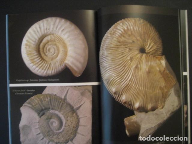 Coleccionismo de fósiles: TESOROS FOSILES DEL MUNDO. PALEONTOLOGIA, AMMONITES, TRILOBITES, DINOSAURIOS. - Foto 4 - 146127053