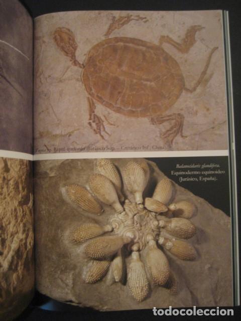Coleccionismo de fósiles: TESOROS FOSILES DEL MUNDO. PALEONTOLOGIA, AMMONITES, TRILOBITES, DINOSAURIOS. - Foto 6 - 146127053