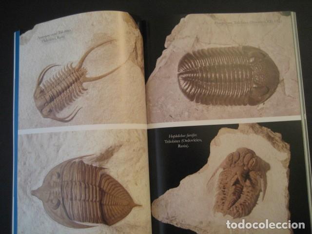 Coleccionismo de fósiles: TESOROS FOSILES DEL MUNDO. PALEONTOLOGIA, AMMONITES, TRILOBITES, DINOSAURIOS. - Foto 7 - 146127053