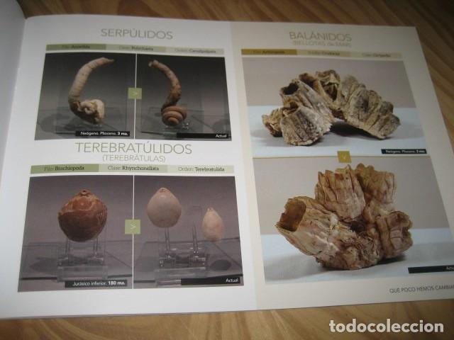 Coleccionismo de fósiles: QUE POCO HEMOS CAMBIADO. FOSILES, PALEONTOLOGIA - Foto 2 - 228509545