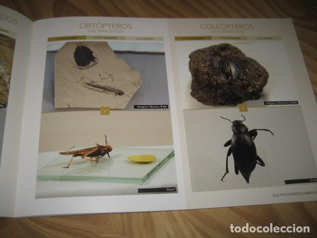 Coleccionismo de fósiles: QUE POCO HEMOS CAMBIADO. FOSILES, PALEONTOLOGIA - Foto 6 - 228509545