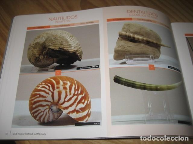 Coleccionismo de fósiles: QUE POCO HEMOS CAMBIADO. FOSILES, PALEONTOLOGIA - Foto 11 - 228509545