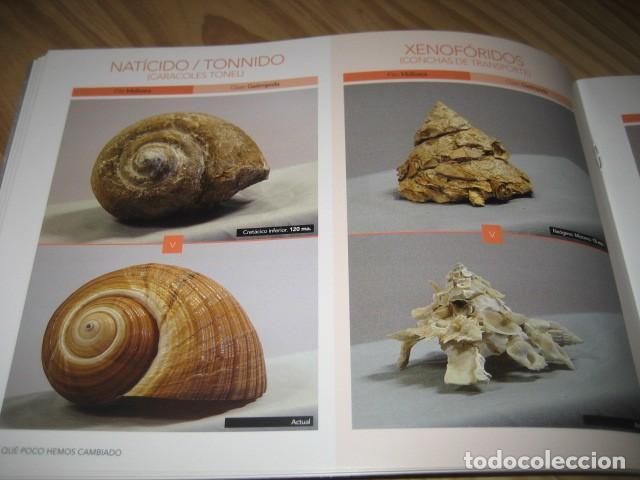 Coleccionismo de fósiles: QUE POCO HEMOS CAMBIADO. FOSILES, PALEONTOLOGIA - Foto 15 - 228509545