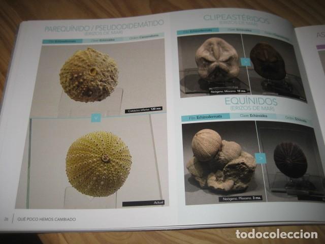 Coleccionismo de fósiles: QUE POCO HEMOS CAMBIADO. FOSILES, PALEONTOLOGIA - Foto 18 - 228509545