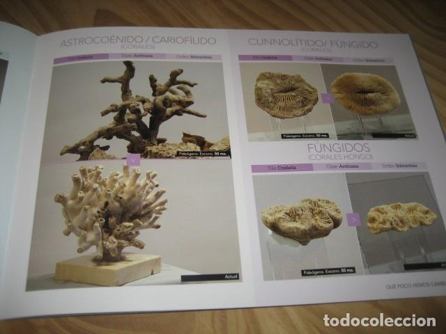 Coleccionismo de fósiles: QUE POCO HEMOS CAMBIADO. FOSILES, PALEONTOLOGIA - Foto 19 - 228509545
