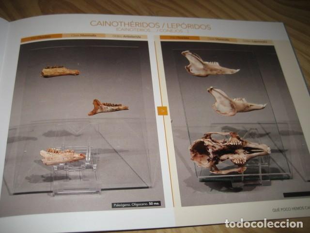 Coleccionismo de fósiles: QUE POCO HEMOS CAMBIADO. FOSILES, PALEONTOLOGIA - Foto 23 - 228509545